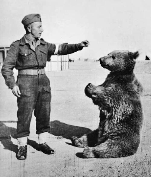 Miś Wojtek / Bear Wojtek during World War II (źródło:wikipedia)