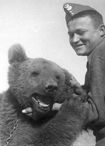 Miś Wojtek / Bear Wojtek, World War II (źródło: www.miswojteksopot.org)